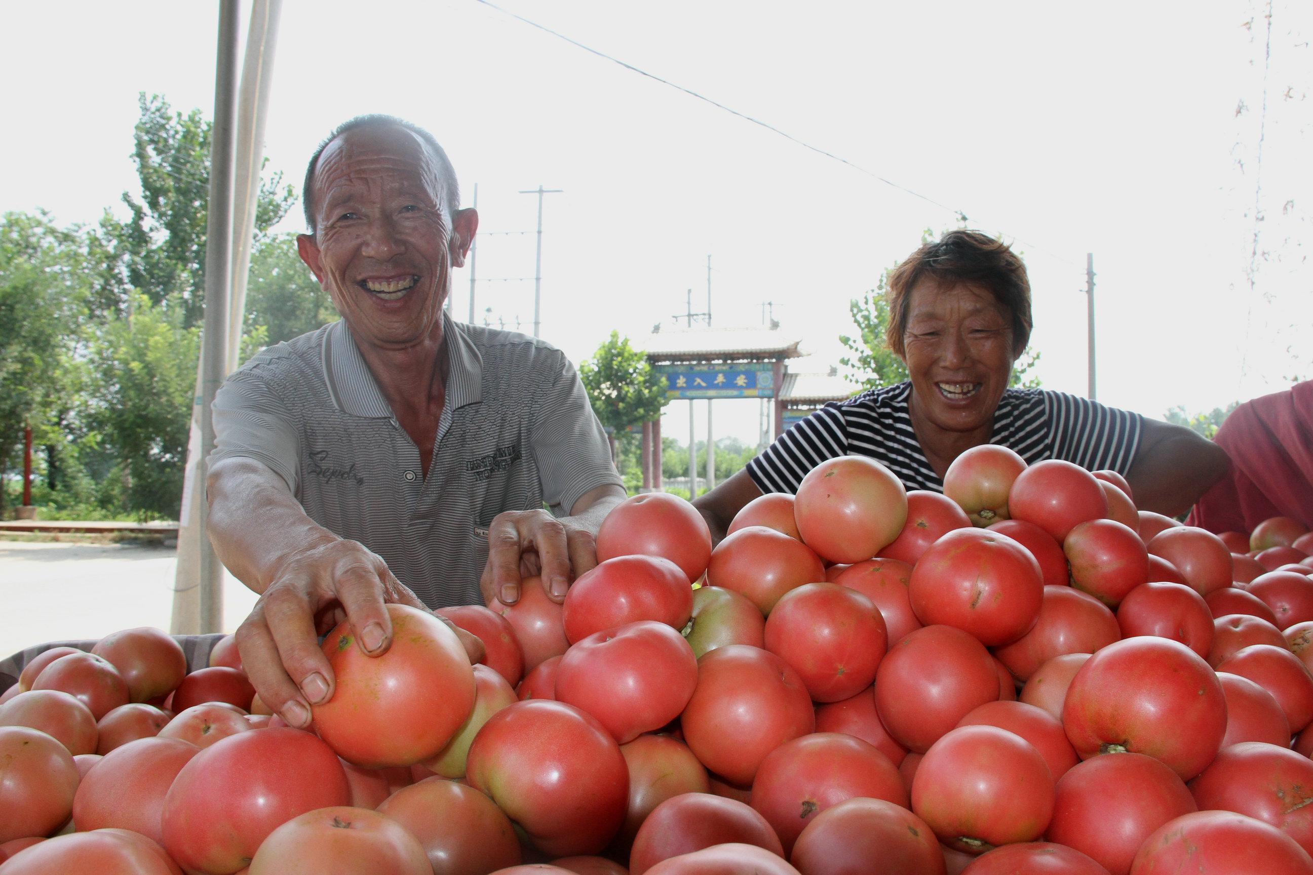 """阳信:贫困户的西红柿""""红了"""""""