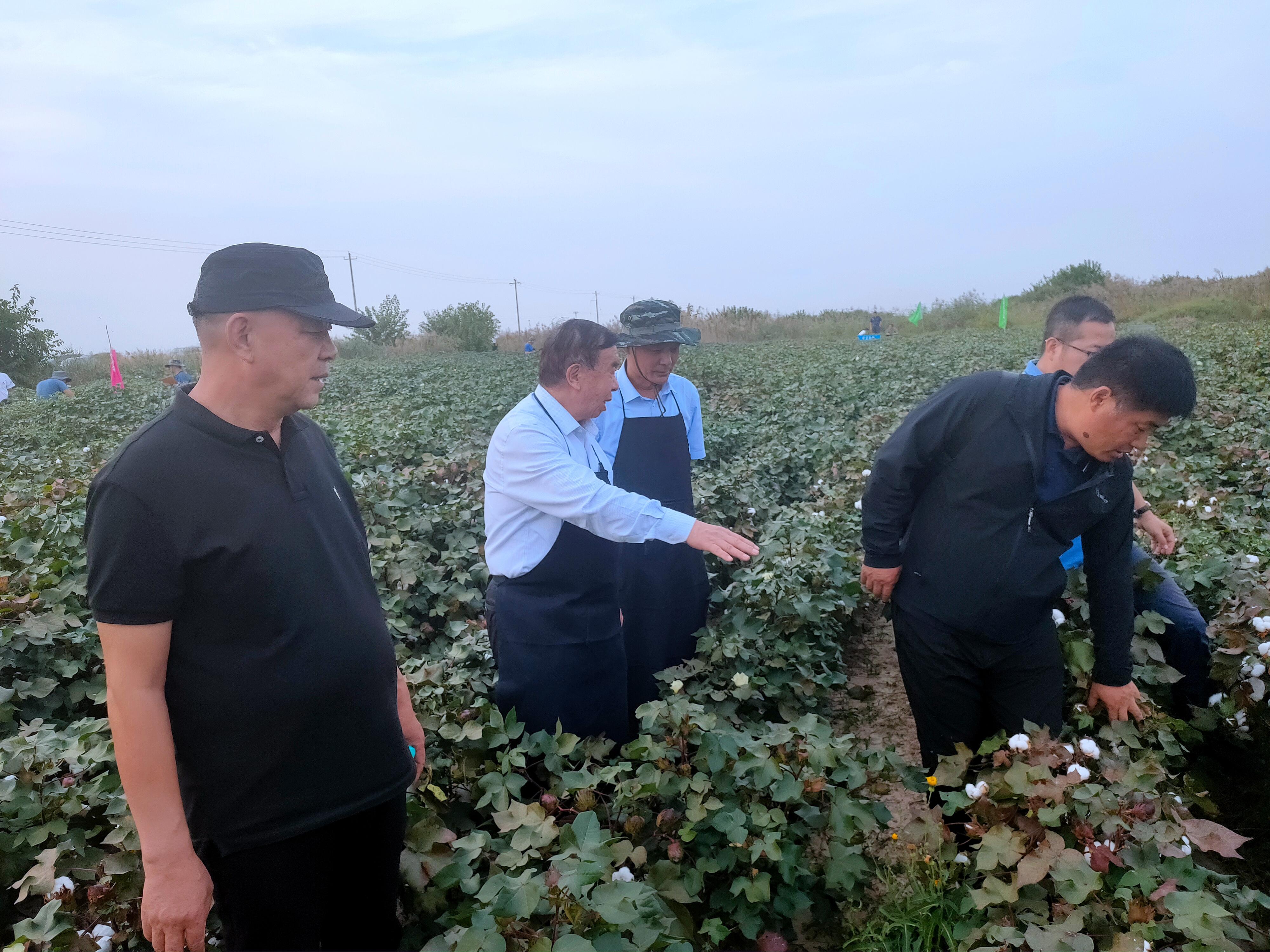 黄河流域棉花生产全程机械化(无棣)示范点亩产籽棉突破400公斤