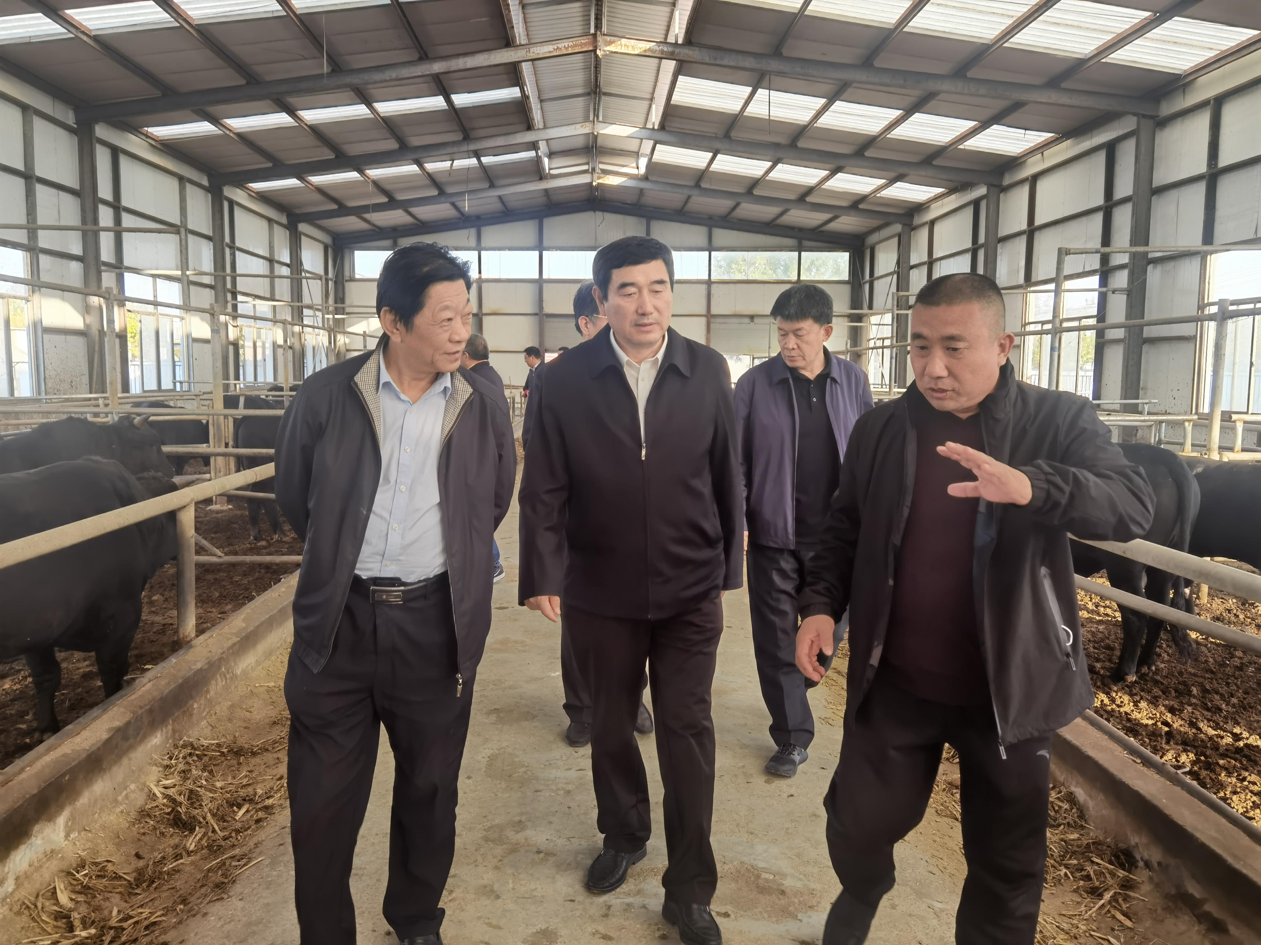 滨州畜牧产业专班:畜牧产业稳产提质  龙头领军强链延链