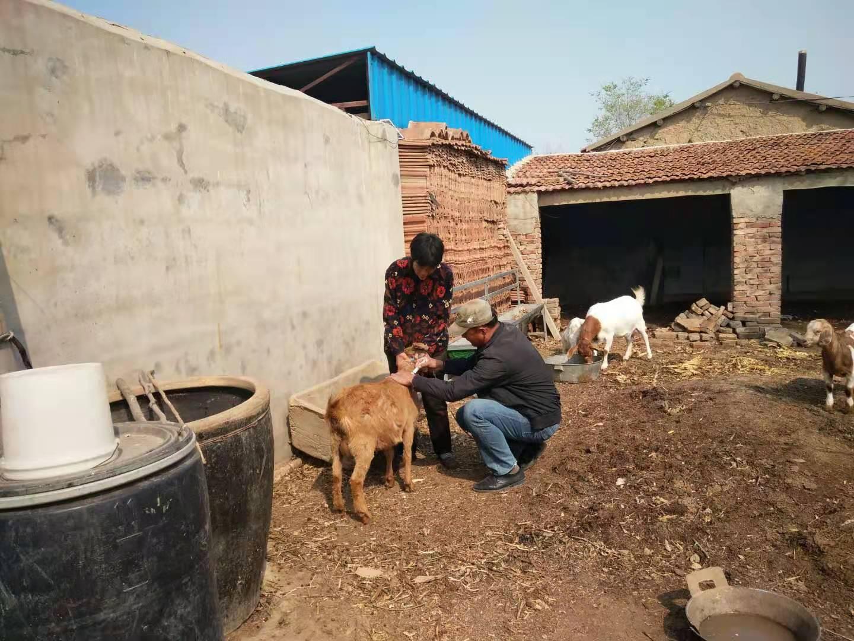 黄升镇4月底全面完成春季动物防疫工作