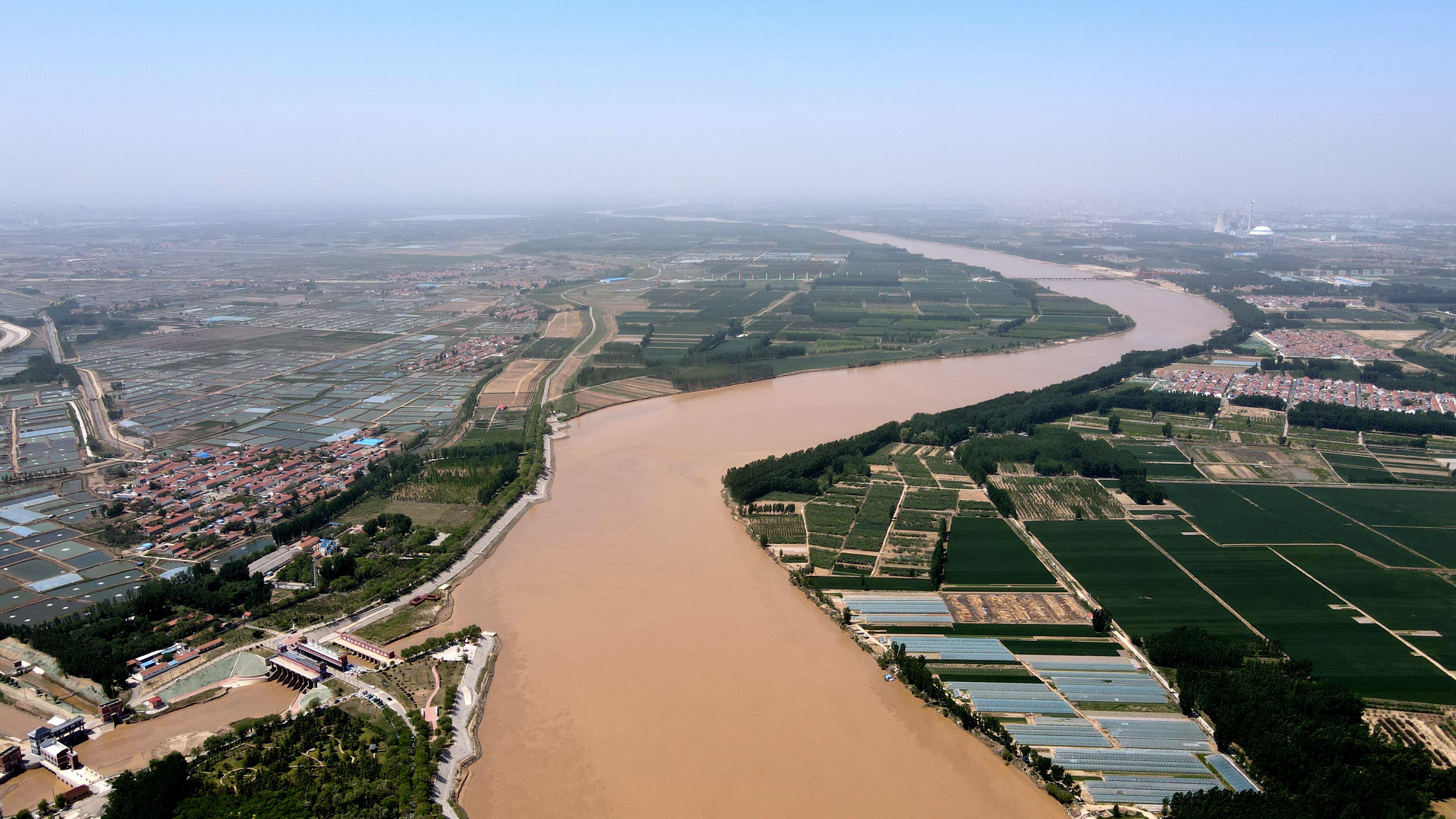 滨州:初夏黄河生态美