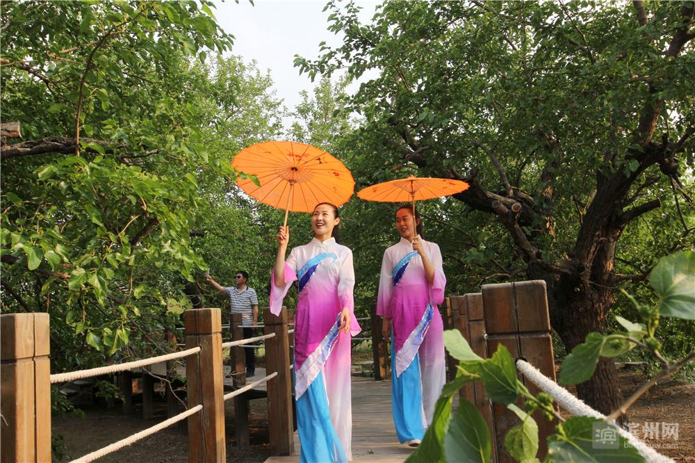 在无棣县车王镇千年古桑园内,桑葚飘香,游人如织。拍抖音的、拍写真的、拍快手的游客与千年古桑相映成景。