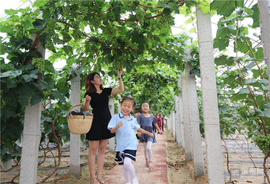 时下,随着暑假来临,棚内2600株红心火龙果和2000株夏黑葡萄进入采摘期,成为体验采摘乐、亲子游和亲近大自然的好去处。