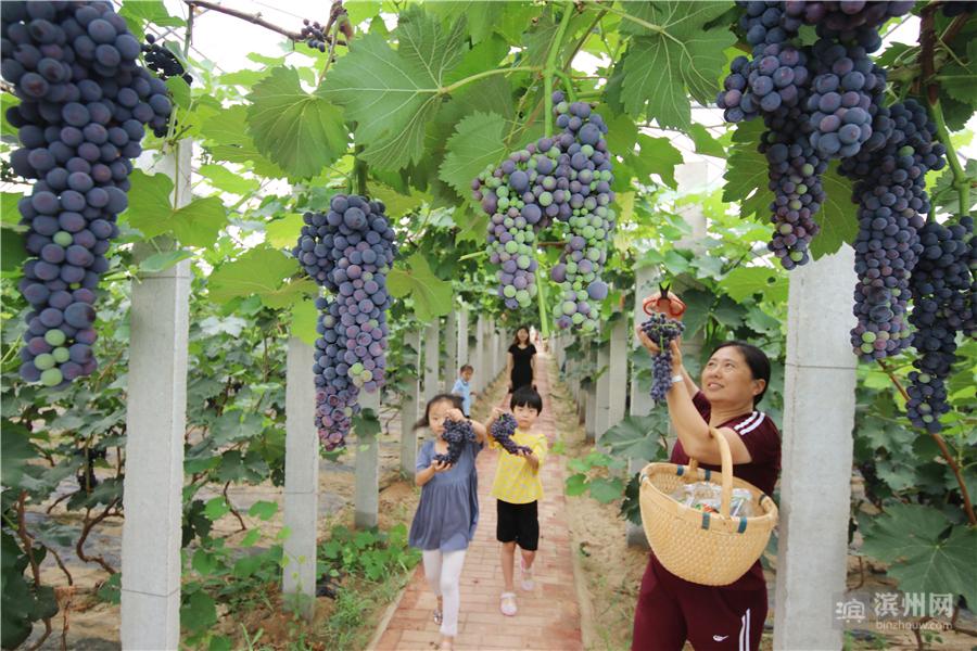 7月10日,无棣县海丰街道中心幼儿园的孩子们在润春家庭农场葡萄长廊下玩耍。