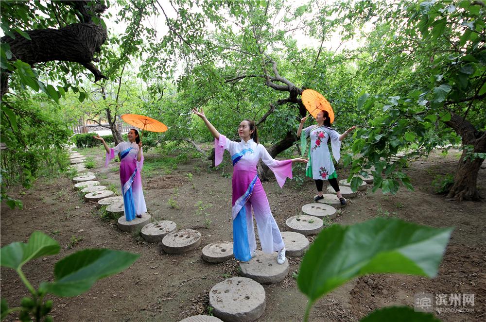 5月12日,几位游客在无棣古桑园里拍写真。